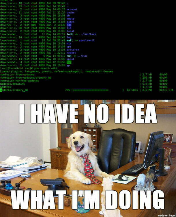 dog meme with code